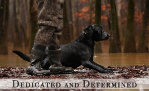 Black Lab-Duck-Dog